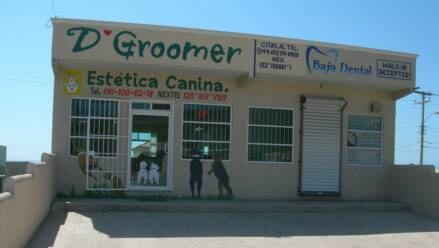 how to become a certified groomer